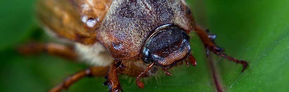 Beetle Photo